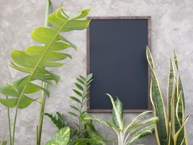 Gewächshauspflanze mit monsteraaglaonemachinese evergreenficus elastica gepunkteter betelzamioculcas zamifoliabird of paradisebromeliad und mock up black board auf betonwandoberfläche