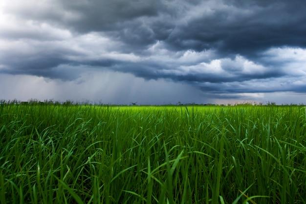 Gewitterhimmel regenwolken auf dem reisfeld