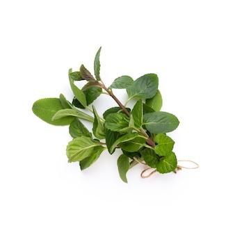 Gewürzkräuterblätter und chilipfeffer auf weißem hintergrund. gemüsemuster. blumen und gemüse auf weißem hintergrund. draufsicht, flach liegen.