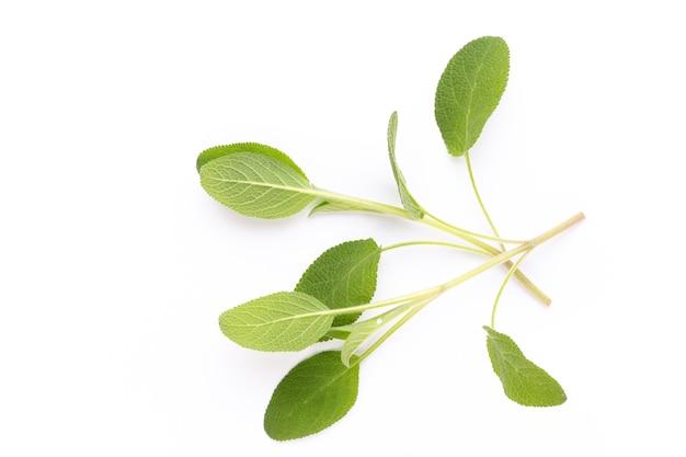 Gewürzpflanze isoliert auf weißem tisch