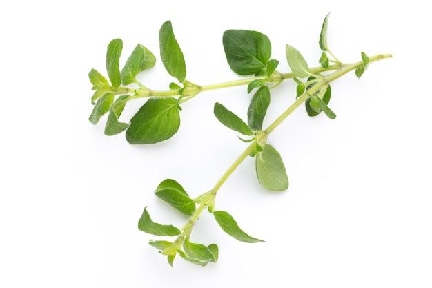 Gewürzpflanze lokalisiert auf weißem hintergrund. draufsicht. flaches legemuster.