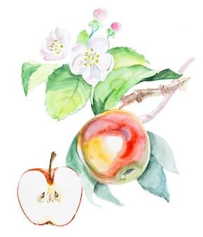 Gezeichneter roter apfel des aquarells hand mit blumen. lokalisierte eco naturkost-fruchtillustration auf weiß