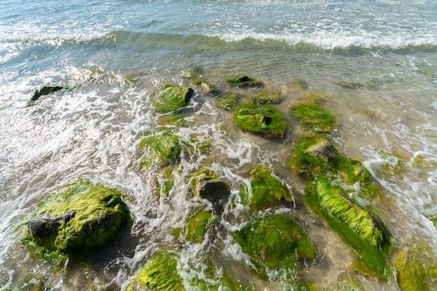 Gezeitenbohrung. wellen brechen auf steinen, die von moos und algen bewachsen sind. schöner meerblick.