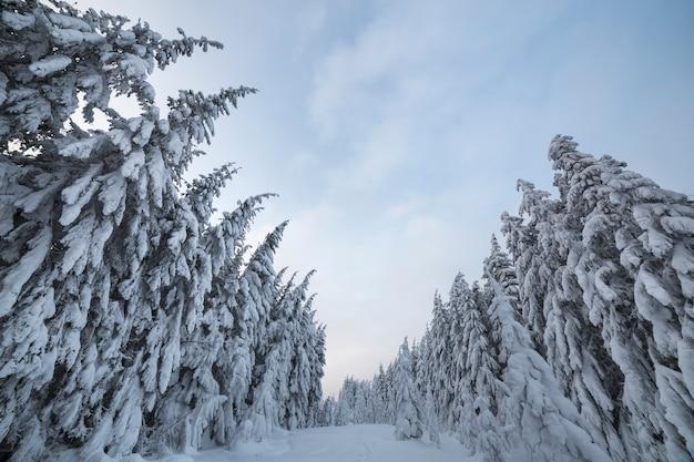 Gezierte bäume bedeckt mit schnee im winterwald