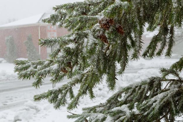 Gezierte bäume mit schnee bedeckt fokus auf der niederlassung. landschaft.