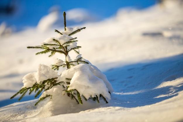 Gezierter baum mit den grünen nadeln bedeckt mit tiefem schnee