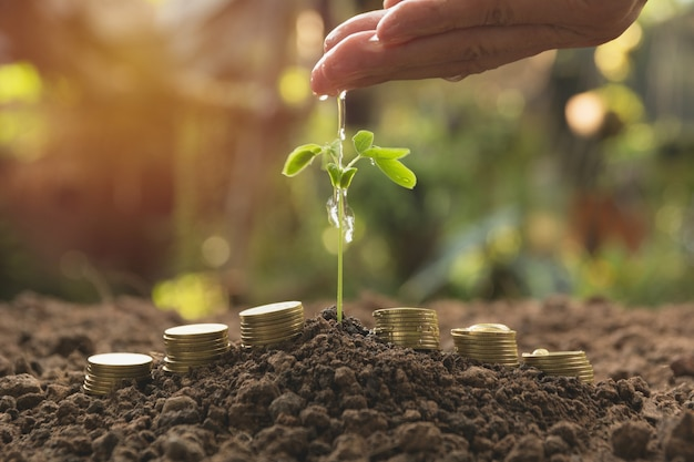 Gießen einer jungpflanze von hand mit stapelmünzen. garten- und bewässerungsanlagen.
