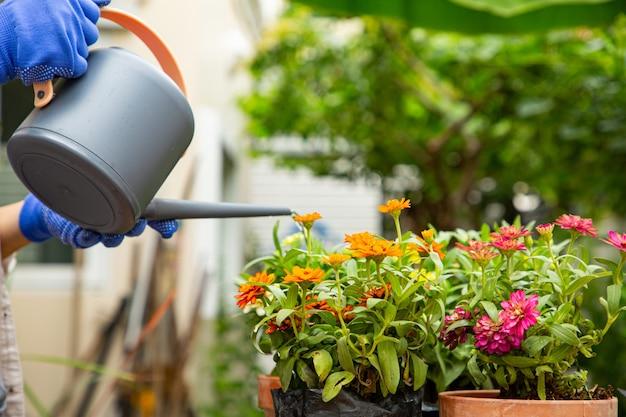 Gießen von wasser, um im freien zu pflanzen. gartenarbeit und dekoration für den aufenthalt zu hause.