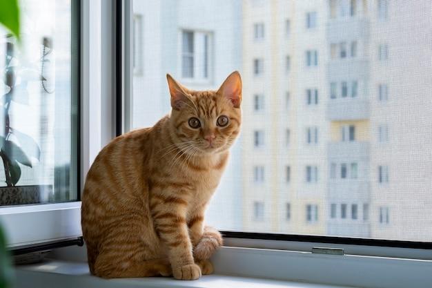 Ginger tabby kätzchen sitzt auf einer fensterbank mit einem moskitonetz