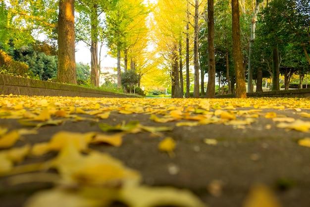 Ginkgobaumblatt herbstpark-herbstsaison des herbstes im freien