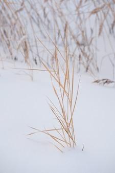 Gitter von den grasschilfbüschen bedeckt im schnee