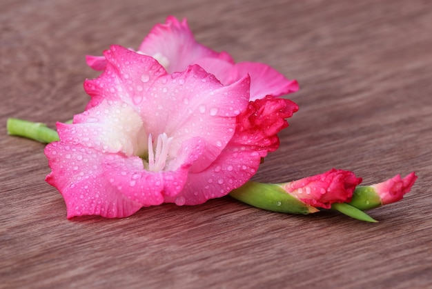 Gladiolenblüte von rosa farbe auf holzoberfläche