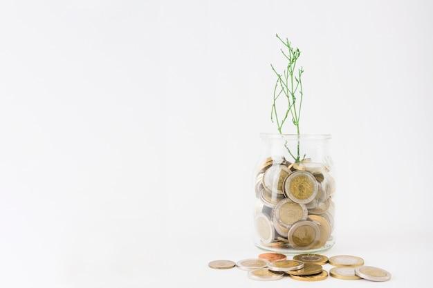 Glas mit münzen und pflanze