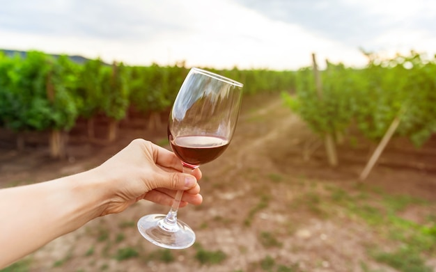 Glas rotwein gegen den weinberg.