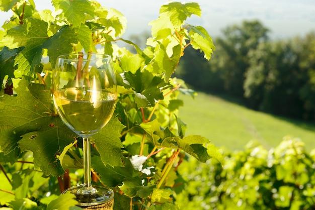 Glas weißwein im weinberg