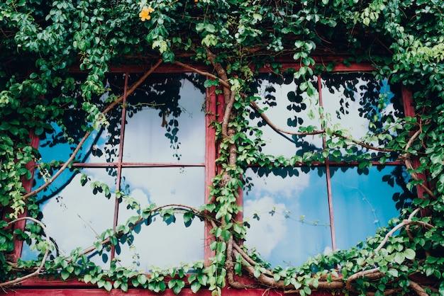 Glasgebäudehaus bedeckt durch grünen efeu mit blauem himmel