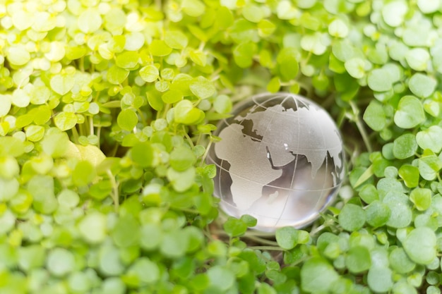 Glaskugel auf grün verlässt für freundliches konzept eco
