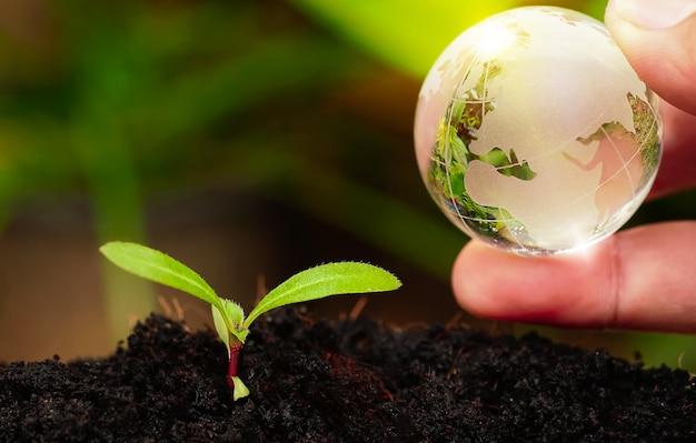 Glaskugel in der hand mit baumwachstum und grüner natur verwischen hintergrund öko earth day konzept