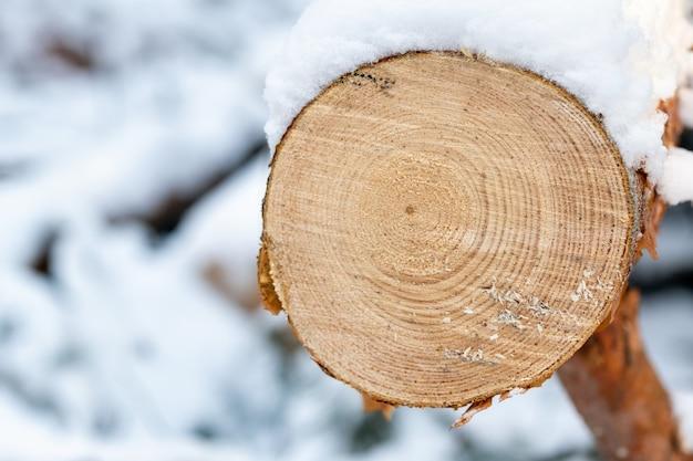 Glatter schnitt an einem baum im winterwald