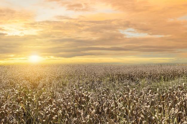 Globale erwärmung der dürre der baum verwelkte heiße sonne