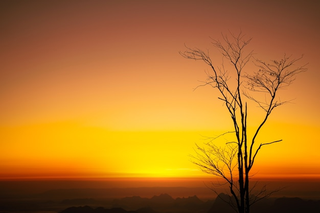 Globale erwärmung und trockene bäume in hitzewellen oder erhöhten temperaturen.