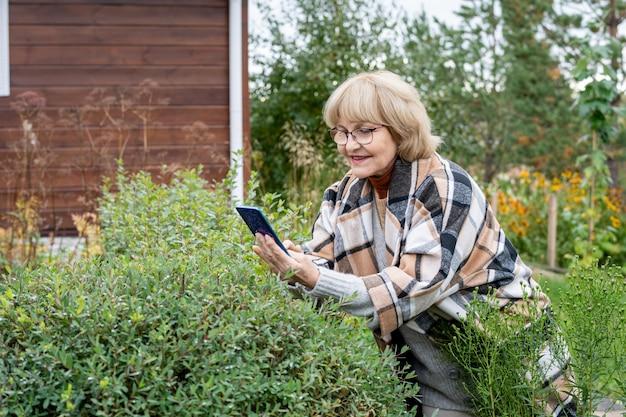 Glückliche blonde ältere frau mit smartphone, die sich über einen der grünen büsche beugt, während sie ihr foto im garten des landhauses macht