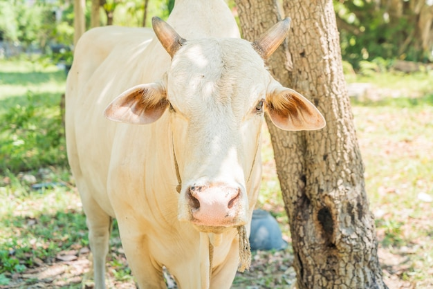 Glückliche einzelne kuh