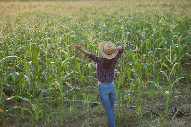 Glückliche frau, die das leben auf dem gebiet genießt, schöner morgensonnenaufgang über dem maisfeld. grünes maisfeld im landwirtschaftlichen garten und licht scheint sonnenuntergang am abend berghintergrund.