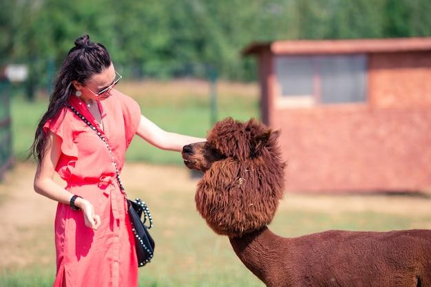Glückliche frau spielt mit nettem alpaka im park