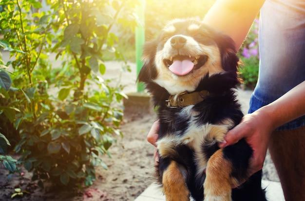 Glückliche freizeit mit dem geliebten hund! der kerl spielt mit einem haustier im garten