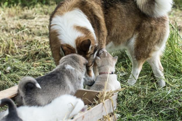 Glückliche hundefamilie, die weder weh noch ärger fürchtet und bis zum ende zusammen sein wird