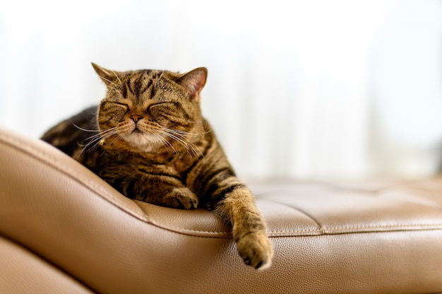 Glückliche katze, die kopieraum betrachtend schläft. fahnenkatze nettes kleines