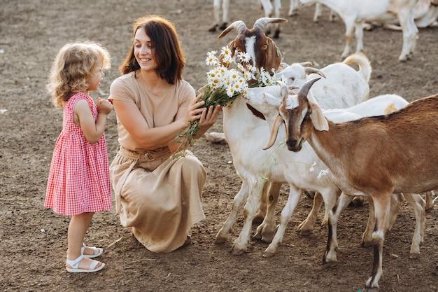 Glückliche mutter und ihre tochter füttern ziegen auf einer öko-farm.
