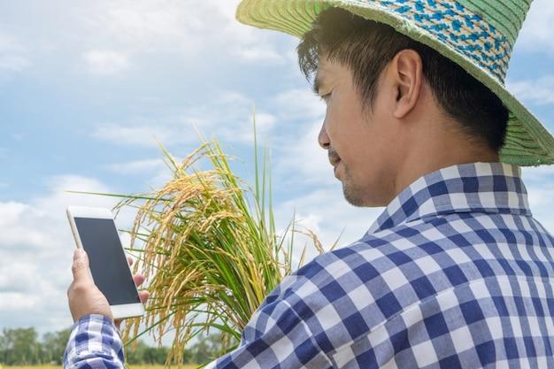Glücklicher asiatischer landwirtmann, der smartphone verwendet und goldreis hält