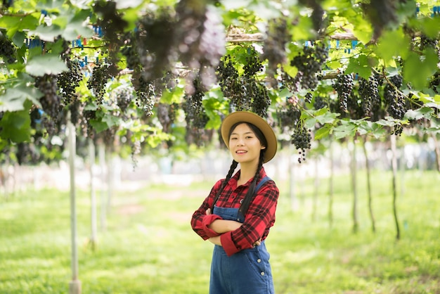 Glücklicher gärtner der jungen frauen, der niederlassungen der reifen blauen traube hält