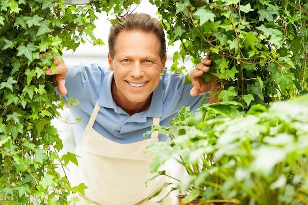 Glücklicher gärtner. schöner reifer mann, der durch pflanzen schaut und lächelt