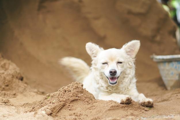Glücklicher halber blutpudelhund