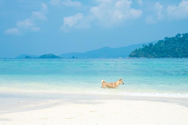Glücklicher hund am seestrand. schöner weißer sandstrand mit ozeanwelle in der sommerzeit