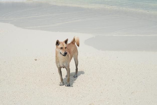 Glücklicher hund am seestrand. weißer sandstrand in der sommerzeit.