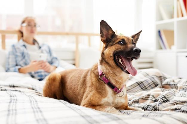 Glücklicher hund, der auf bett sitzt
