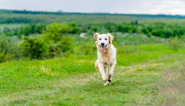 Glücklicher hund, der auf saftiger grüner frühlingsnatur läuft