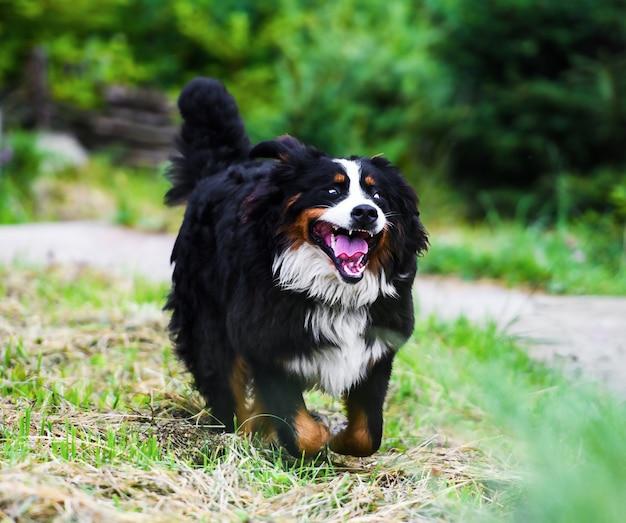 Glücklicher hund, der draußen lächelt