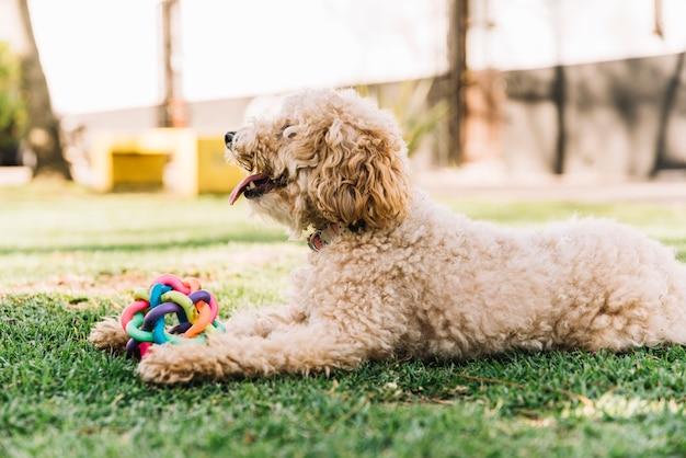Glücklicher hund, der spaß im park hat
