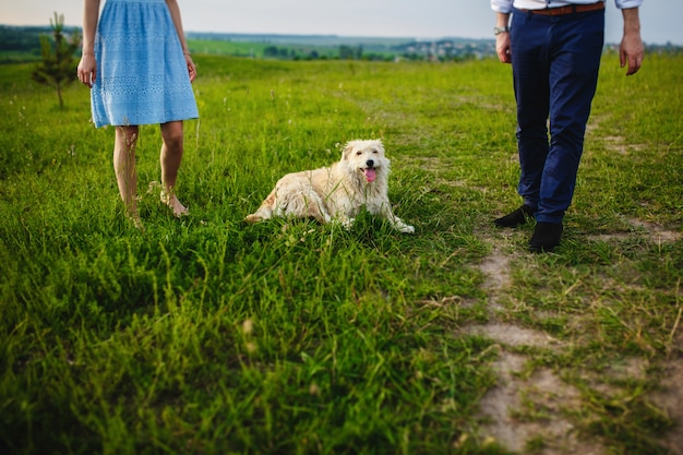 Glücklicher hund hat eine pause mit dem besitzer in der natur