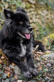 Glücklicher hund in der natur