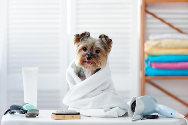 Glücklicher hund in einem tuch, das am groomertisch nach bad sitzt