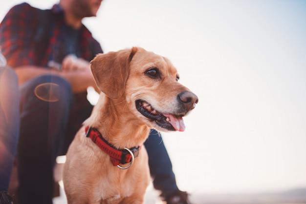 Glücklicher hund und sein besitzer im hintergrund