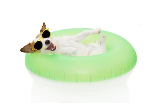 Glücklicher hundesommer, der in den ferien innerhalb eines aufblasbaren und der gläser geht.