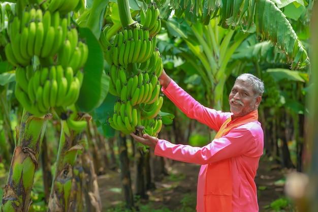 Glücklicher indischer bauer, der rohen bananenbaum in der hand hält