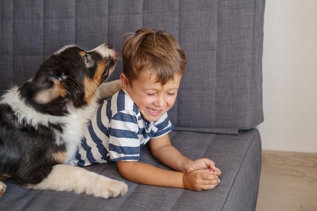 Glücklicher junge des kleinen besitzers spielt mit australischem schäferhund auf der couch. drei farben.